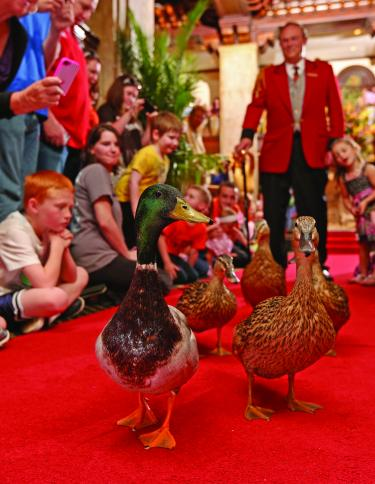 Peabody Duck March - Memphis