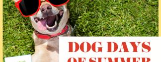 Dog Days MBG